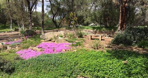Low-Water Garden Design Workshop In Mariposa   Sierra News Online ...