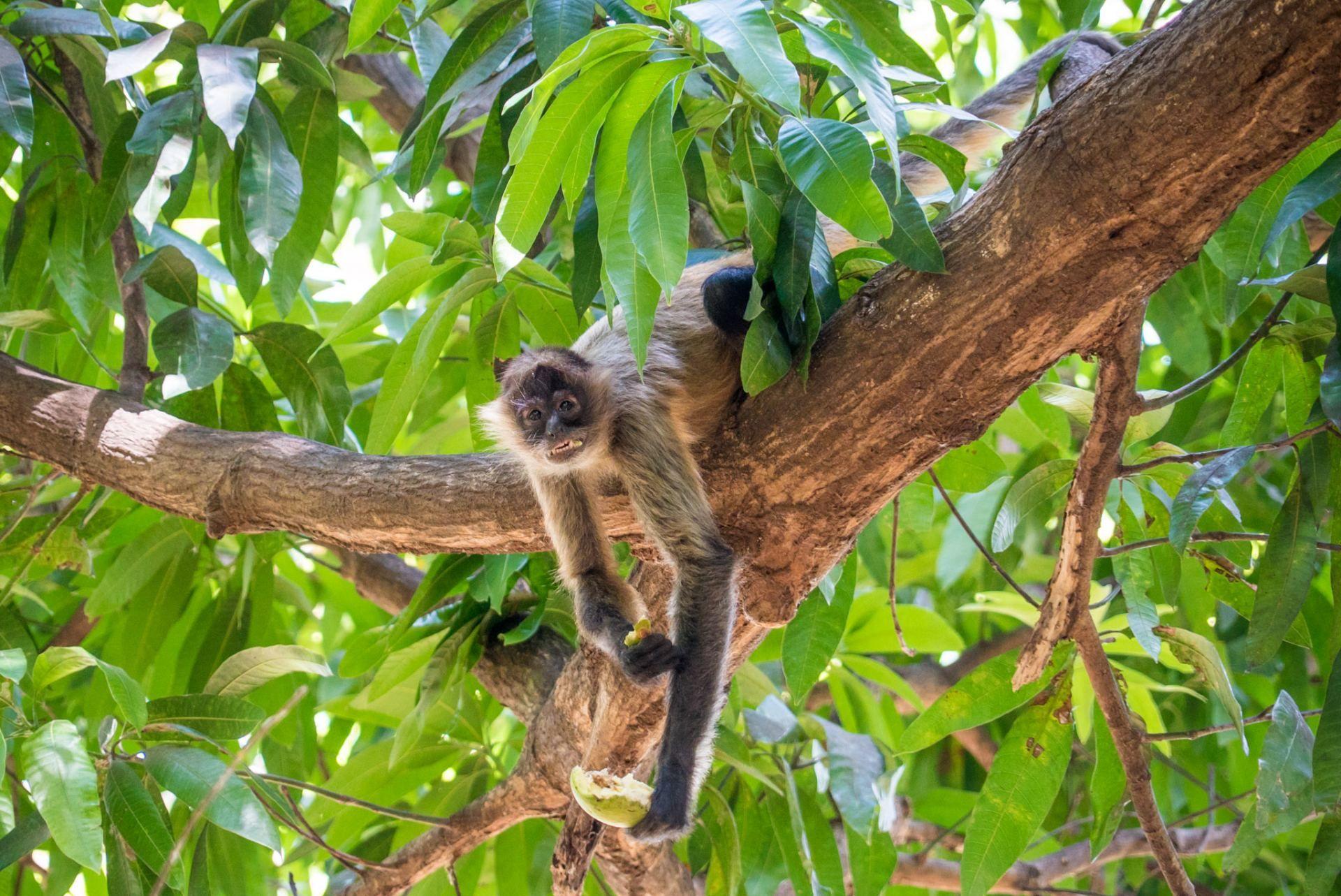 Costa Rica Monkeys Best Location & Easy Tips For