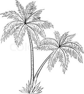 Vector Of Beautiful Tree Palm Tree Drawing Tree Drawing Palm Tree Sketch