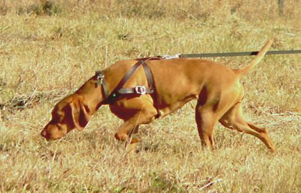 Train Your Dog To Track By Scent Learn Simple Ways To Teach Your
