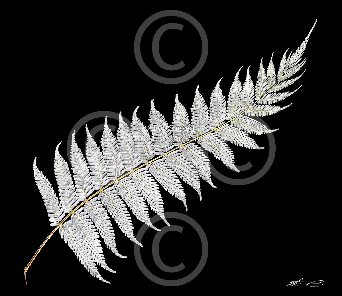 8bfdee44960c7b New Zealand art - Google Search it s the national symbol for New Zealand. Silver  Fern (New Zealand boardroom)