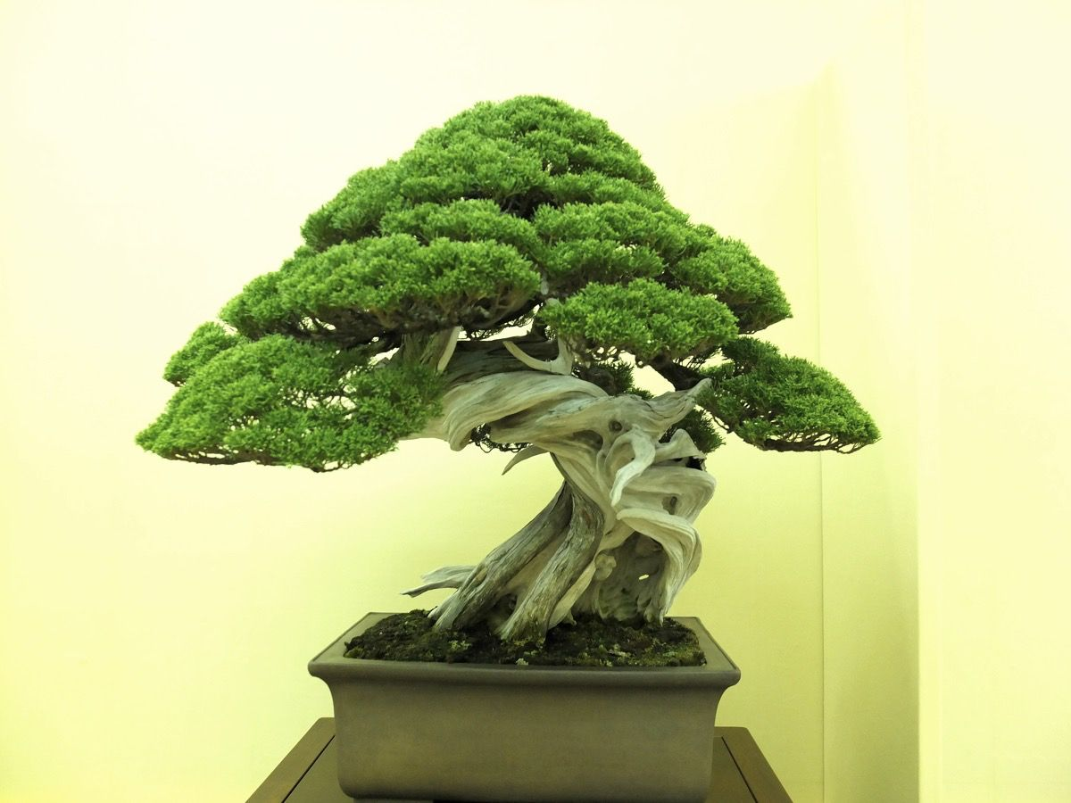 1000 Images About Bonsai Kokedama Kusamono Suiseki Etc On