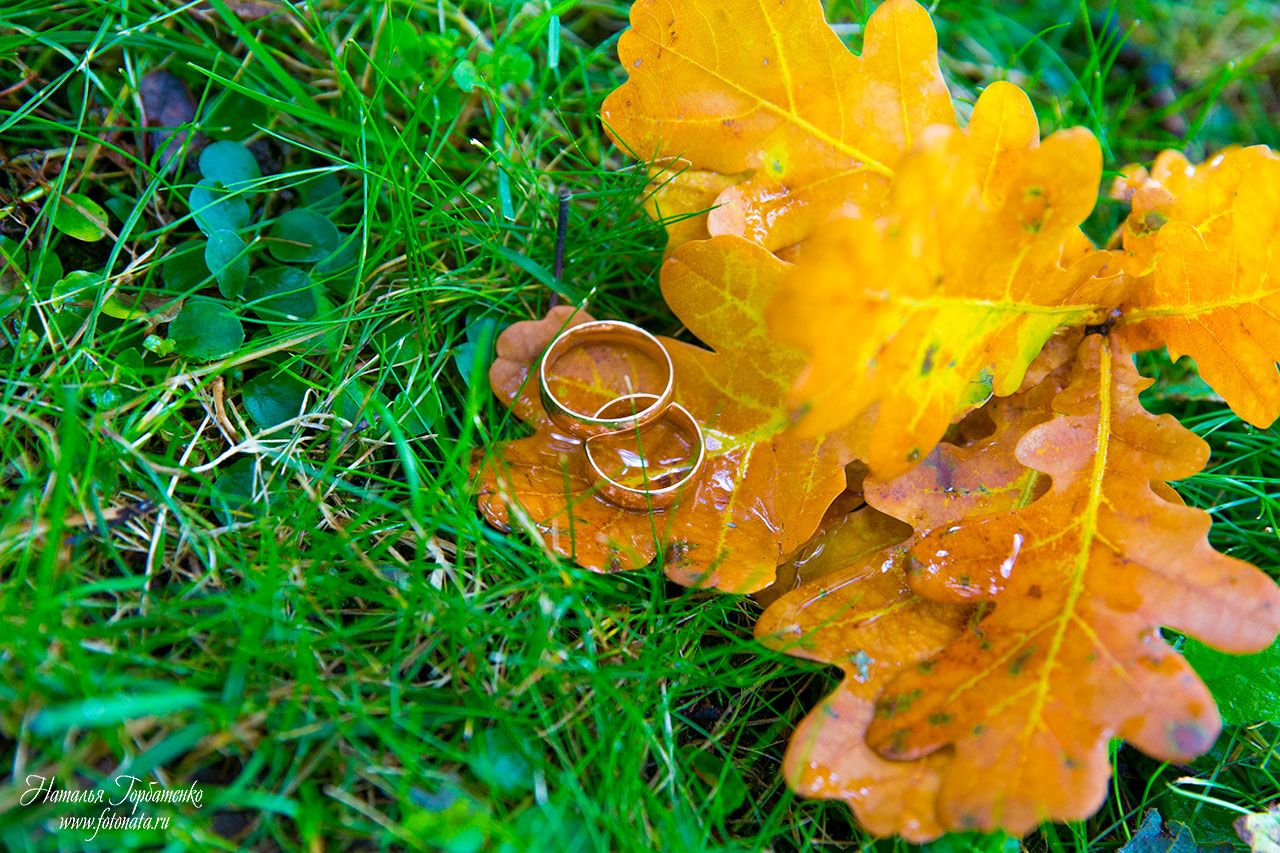 #wedding #rings #gold #leaves #grass #fall #love #photo #photograph