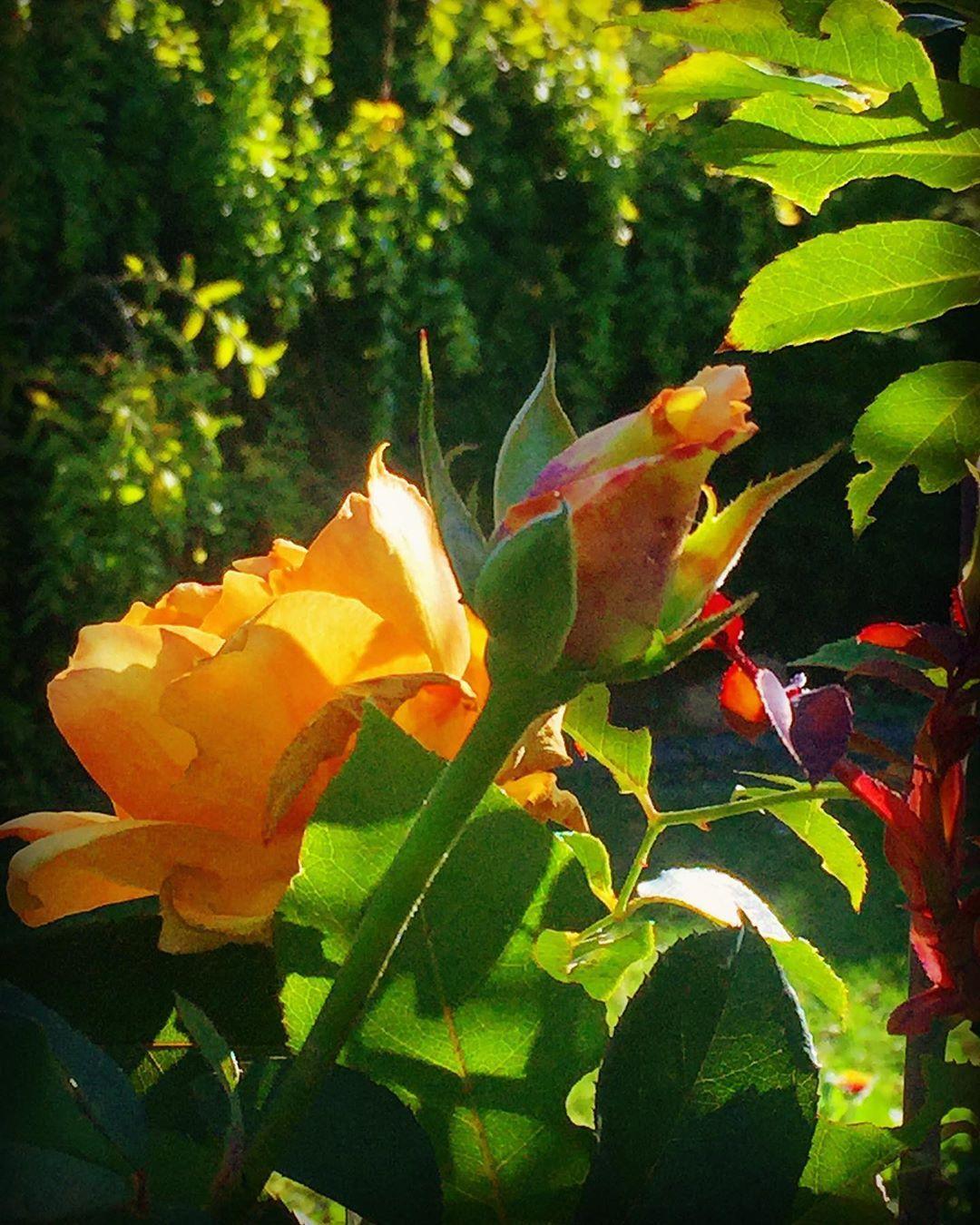 Rzecz W Tym Ze Zamiast Przeprosin Chcemy Uslyszec Dlaczego Dzien Dobry Milego Dnia Zycze Kwiaty