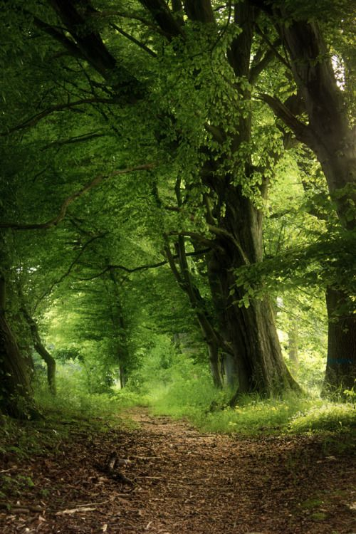 Stephiramona Back To Nature Landscape Forest Path Beautiful Forest