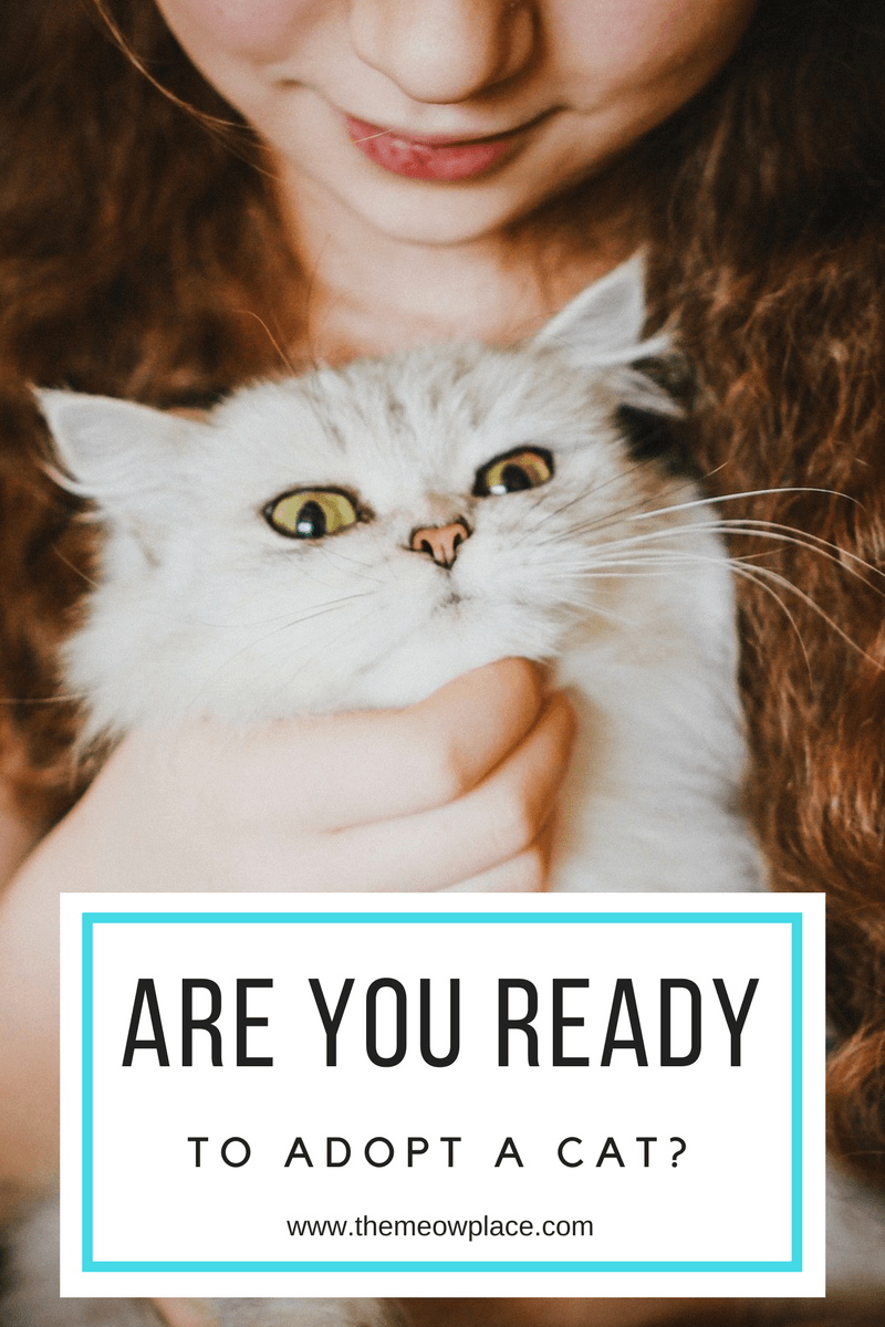 Are You Ready To Own A Cat What You Need To Get Started Cat Adoption Cat Ownership Cat Parenting