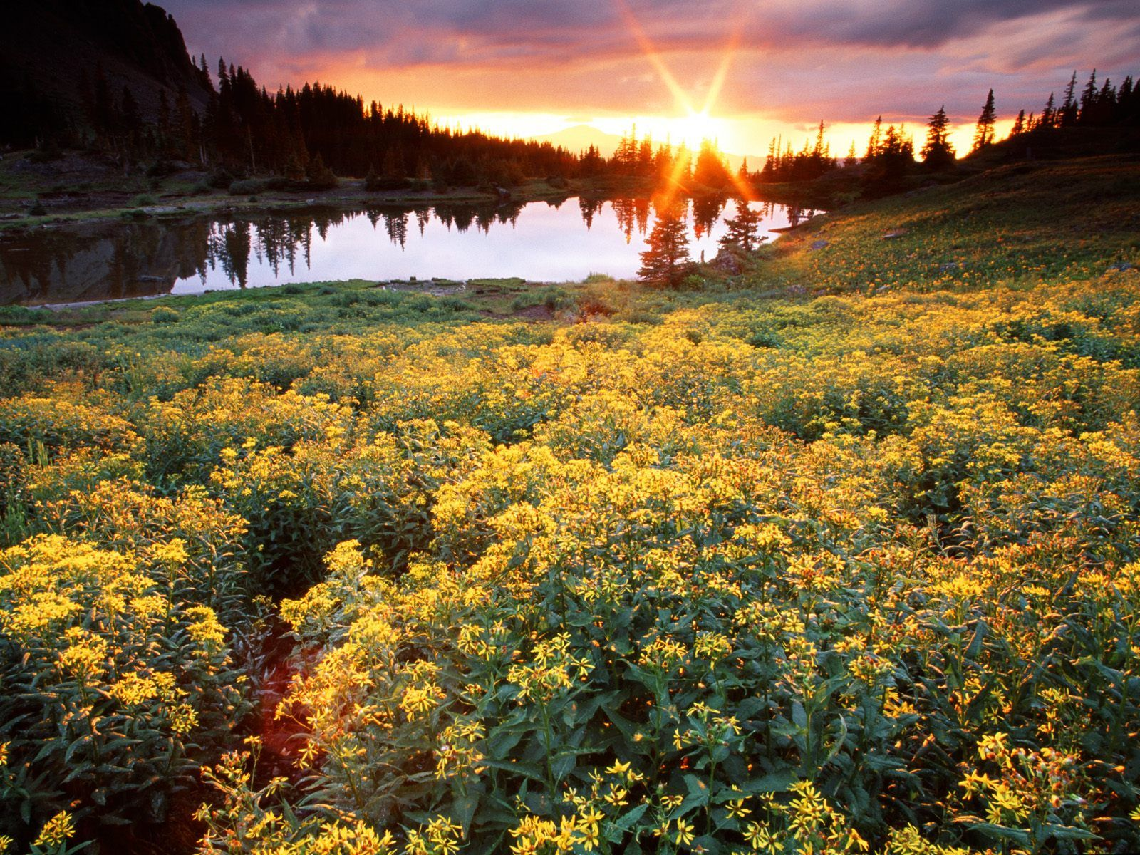 Gold King Basin San Juan Colorado. I would love to just lay in those flowers and relax right this moment as the sun set.