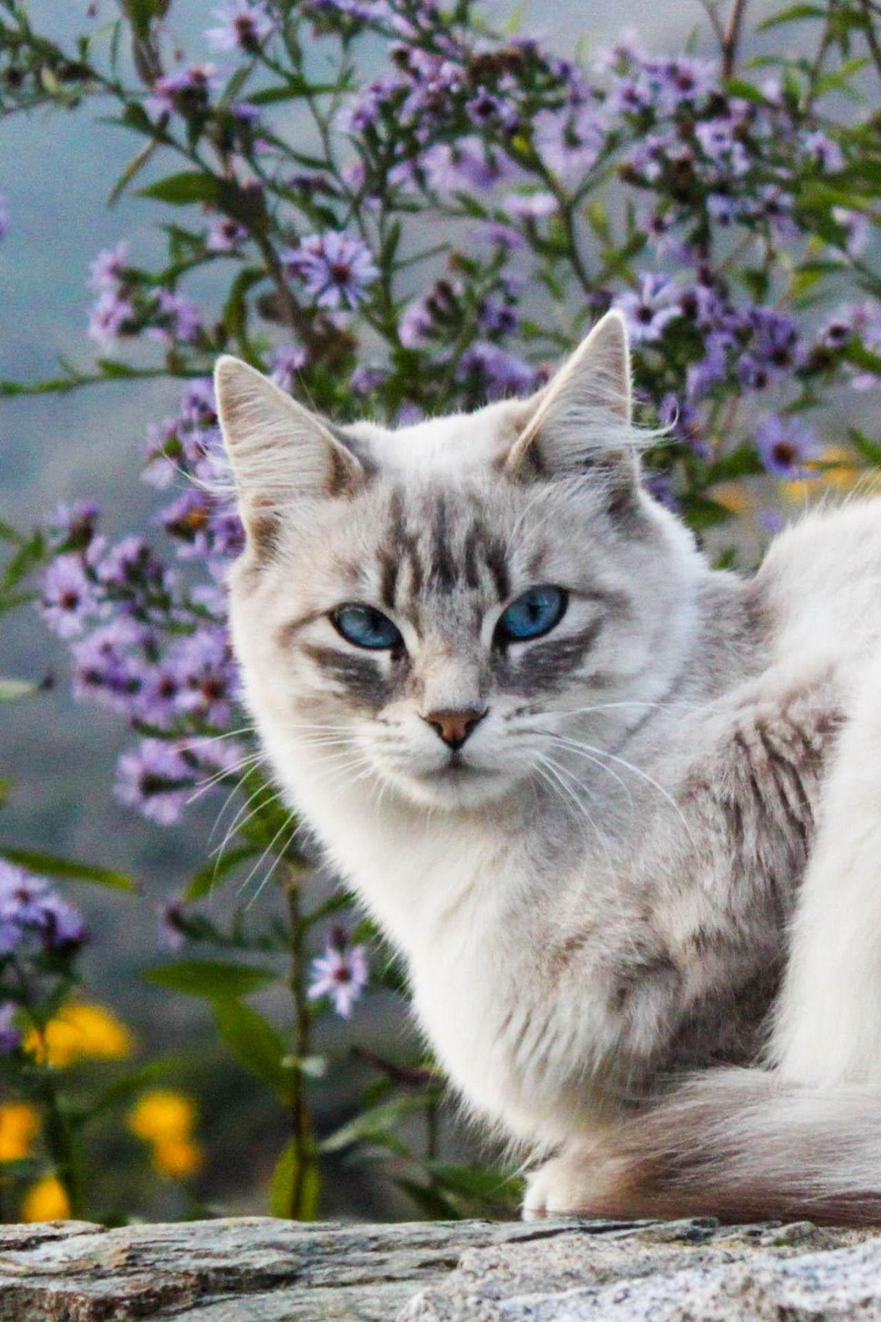 очень красивые фото кошек ещё вступили