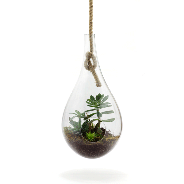 These hanging terrariums are hand-blown using recycled glass ...
