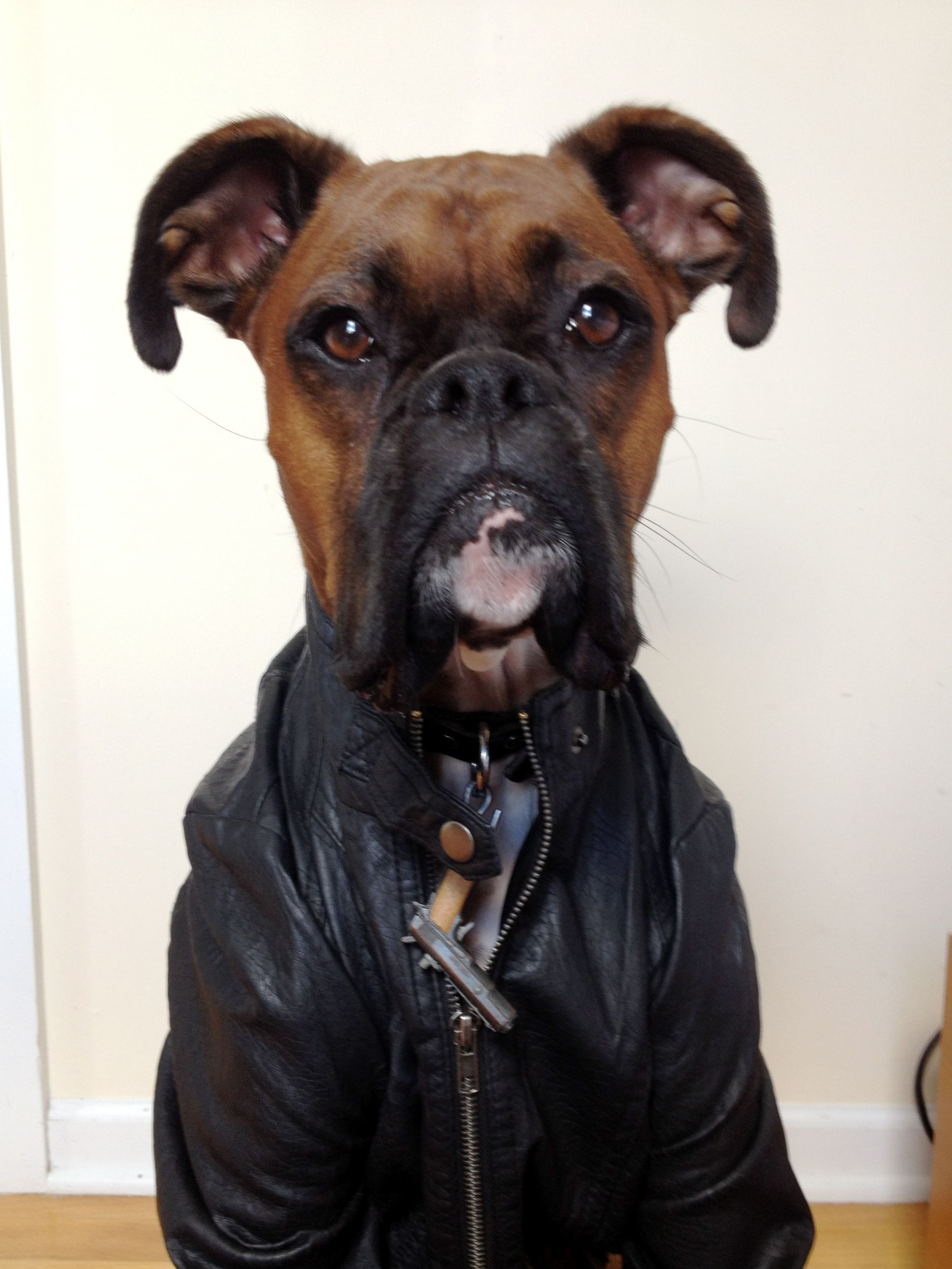 Menswear dog boxer, leather jacket weekend edition ...