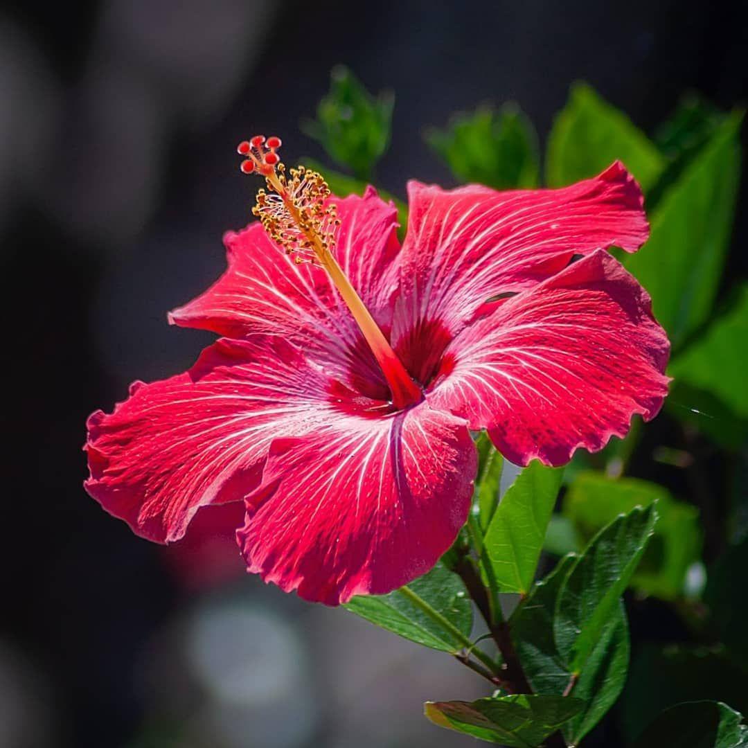 Essa Flor E Simbolo Da Beleza E Virtude Delicada Ela E Linda