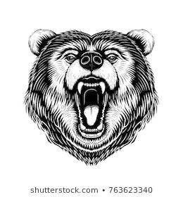 Bear Vector Google Search