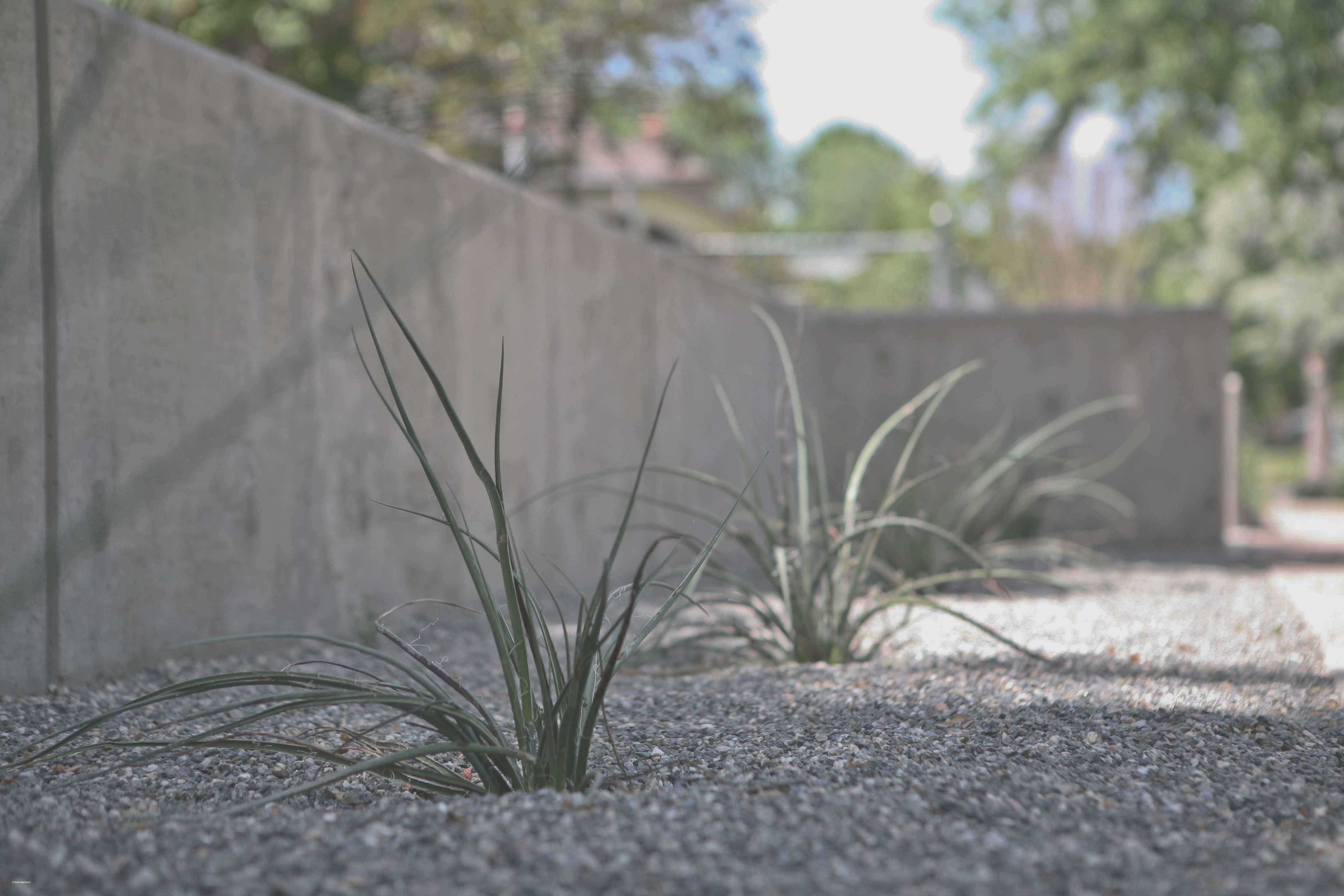 Concrete Retaining Wall Ideas Cement Landscape Design Unique Concrete Retaining Concrete Retaining Walls Retaining Wall Design Concrete Block Retaining Wall