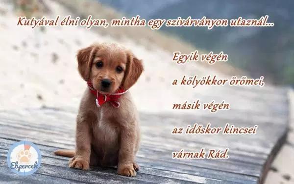 kutyaszeretet idézetek Kutyás idézetek – KutyaSzeretet.hu in 2020   Yorkie, Retriever, Humor