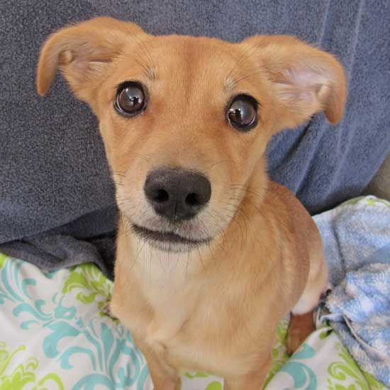 Katella We Can T Resist That Adorable Face Of Yours Stop By Helen Woodward Animal Center In San Diego To Adopt Katella Puppy Adoption Animals Dog Adoption