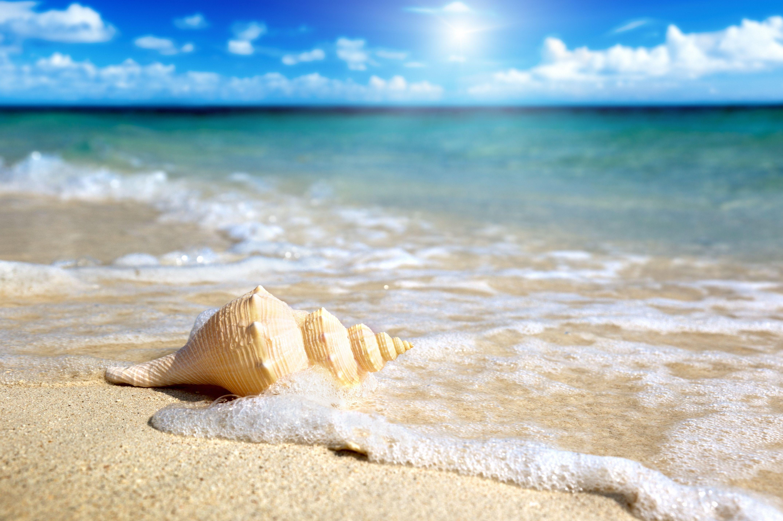 Beach starfish Pesquisa Google Praia