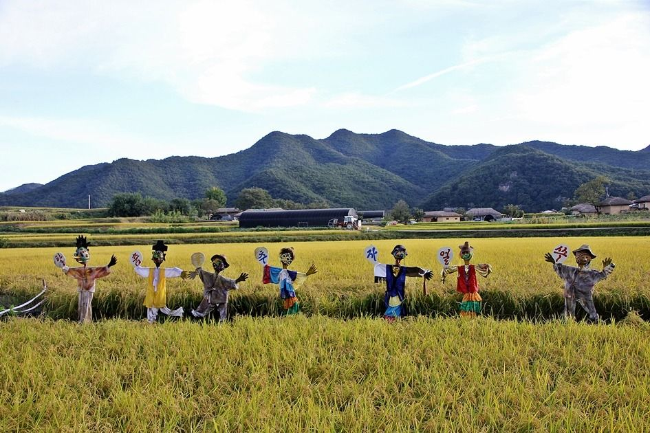 Scarecrow standing in golden paddy fields, Andong, South korea, The letter written on the scarecrow means 'Let's the mask dance'.