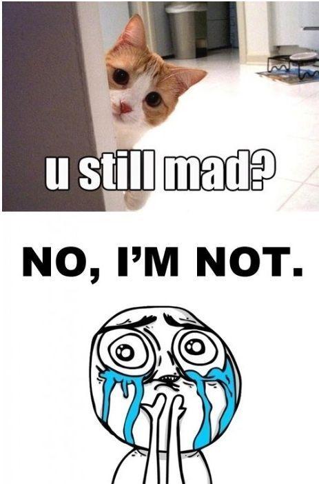 You Still Mad Meme : still, Still, Shed,, Laughs,, Funny