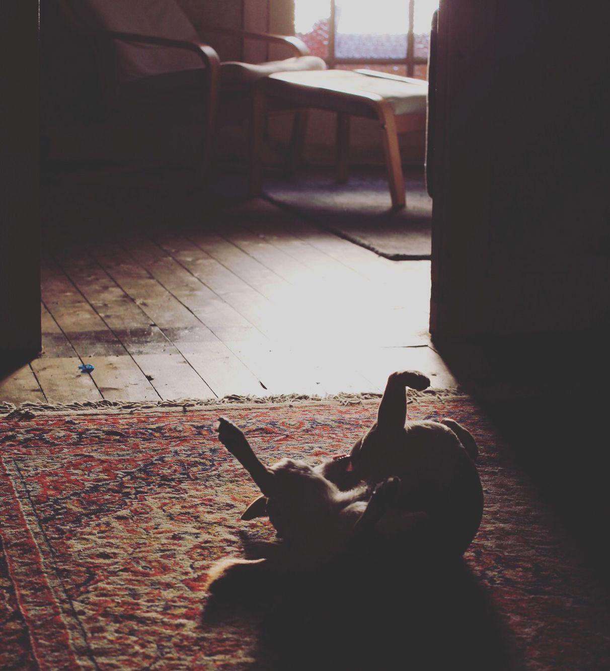 Dog Yoga.