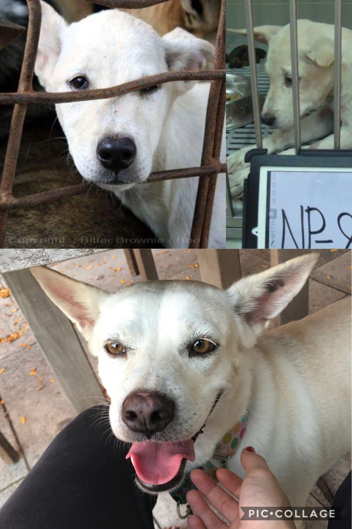 Meet Mila a former street dog & dog meat trade survivor