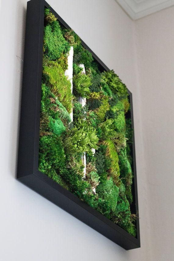 Moss Wall Art Work REAL Preserved No Maintenance Required Living Vertical Garden 20x20 Light Break
