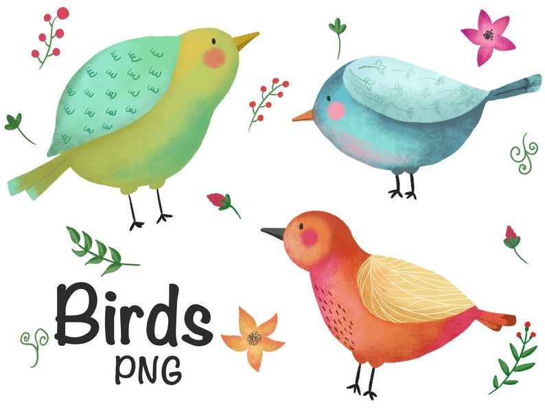 Bird Clipart Bird Png Watercolor Clipart Etsy V 2021 G Illyustracii Ptichki