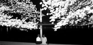 Best Night Cherry Blossom Washington Monument Photo Ever