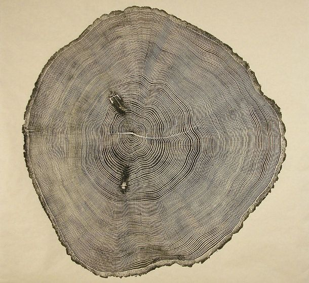 Woodcut Prints Showcase the Beauty of Tree Rings