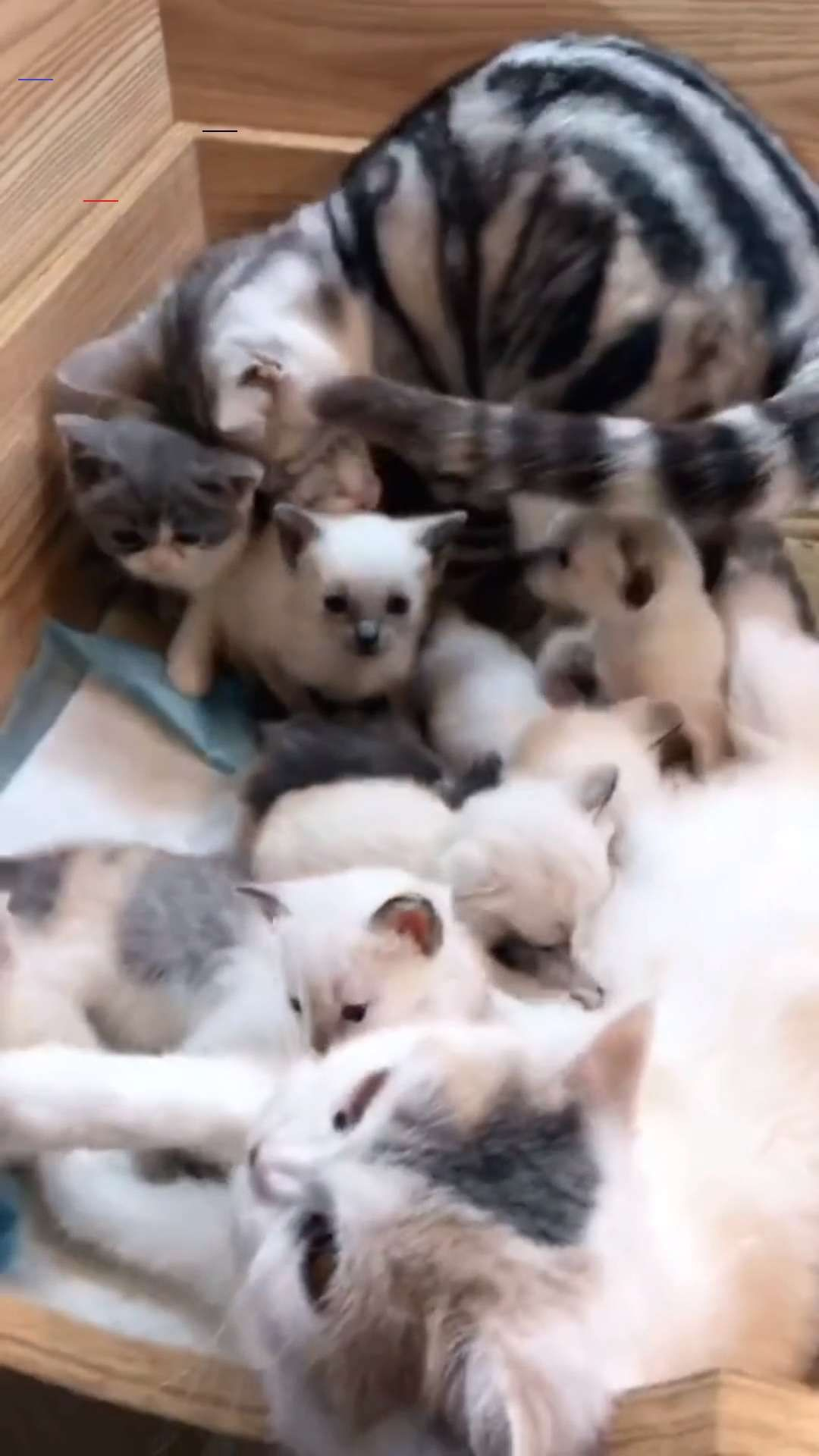 Mother Cat Takes Her Kitten Home Who Can Tell Me How Many Kittens There Are Toysfordogs My Small Cat Rolls In 2020 Cute Baby Animals Cute Animals Funny Animals