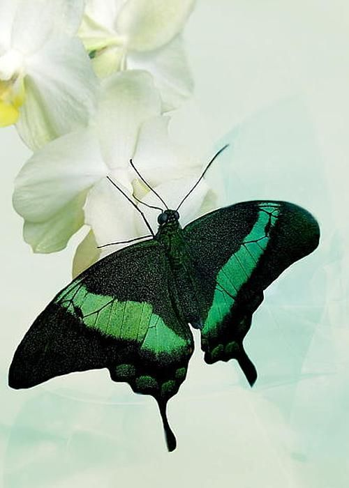 ~Butterfly by Heike Hultsch~