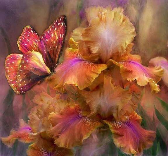 mariposa en el jardín