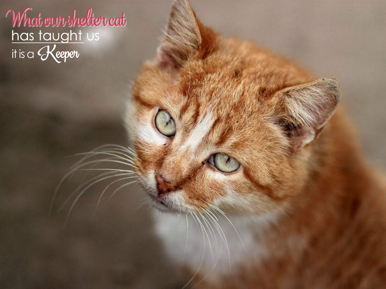 Lessons from Jack What our Shelter Cat Has Taught Us