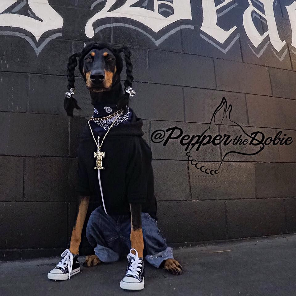 pepper the dobie's 2015 halloween dog costume as snoop dogg from the