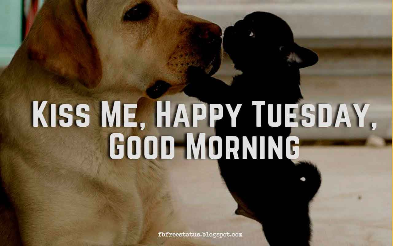 Happy Funny Tuesday Quotes With Images Pictures Tuesday Quotes Good Morning Happy Tuesday Quotes Tuesday Quotes