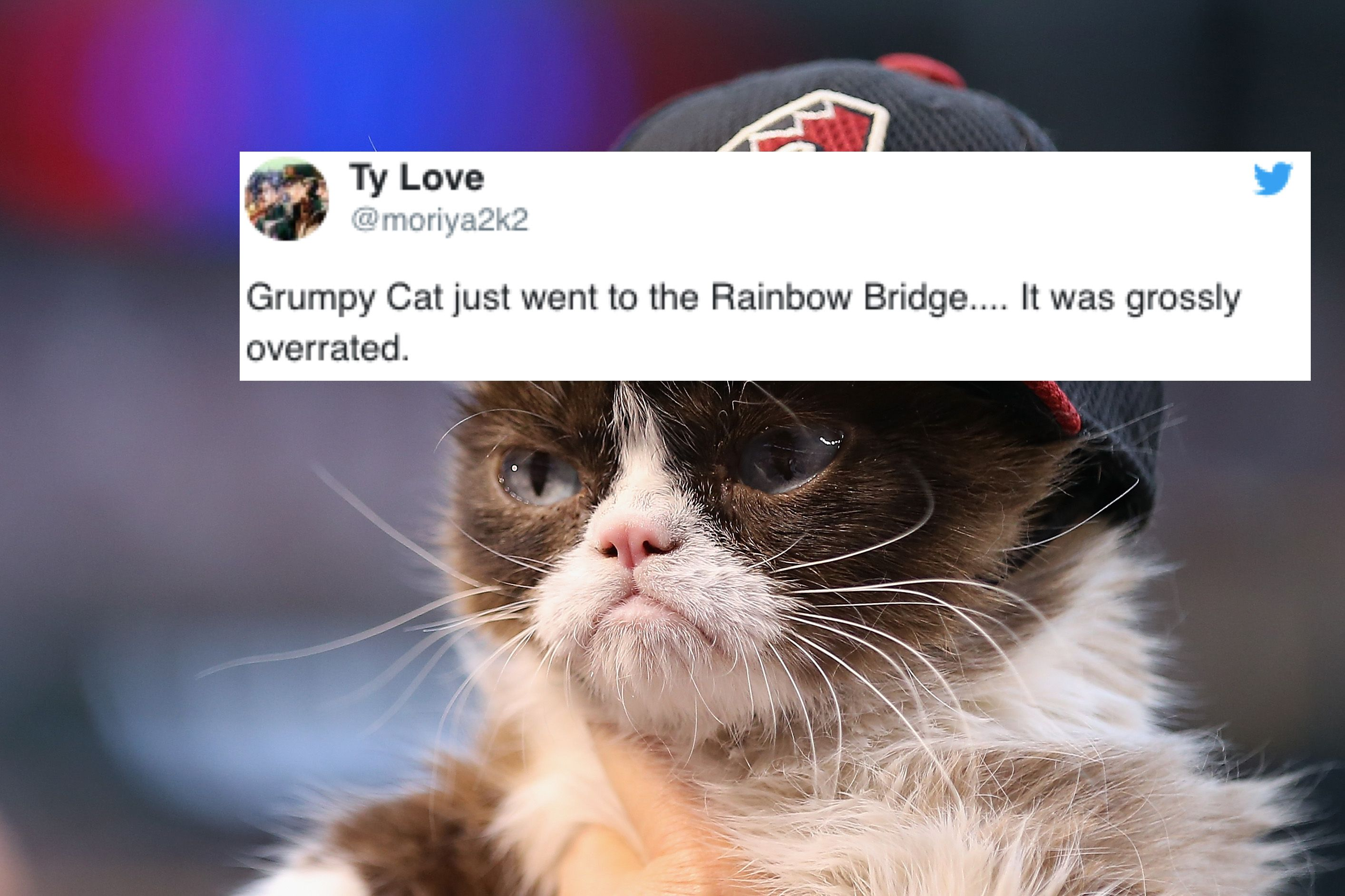 Grumpy Cat Heaven