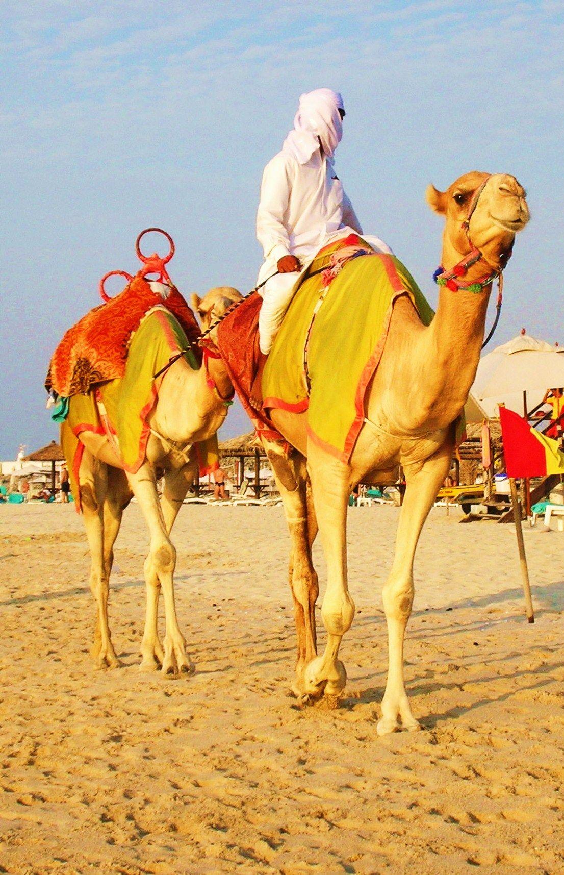 #Dubai #camels #beach 2006
