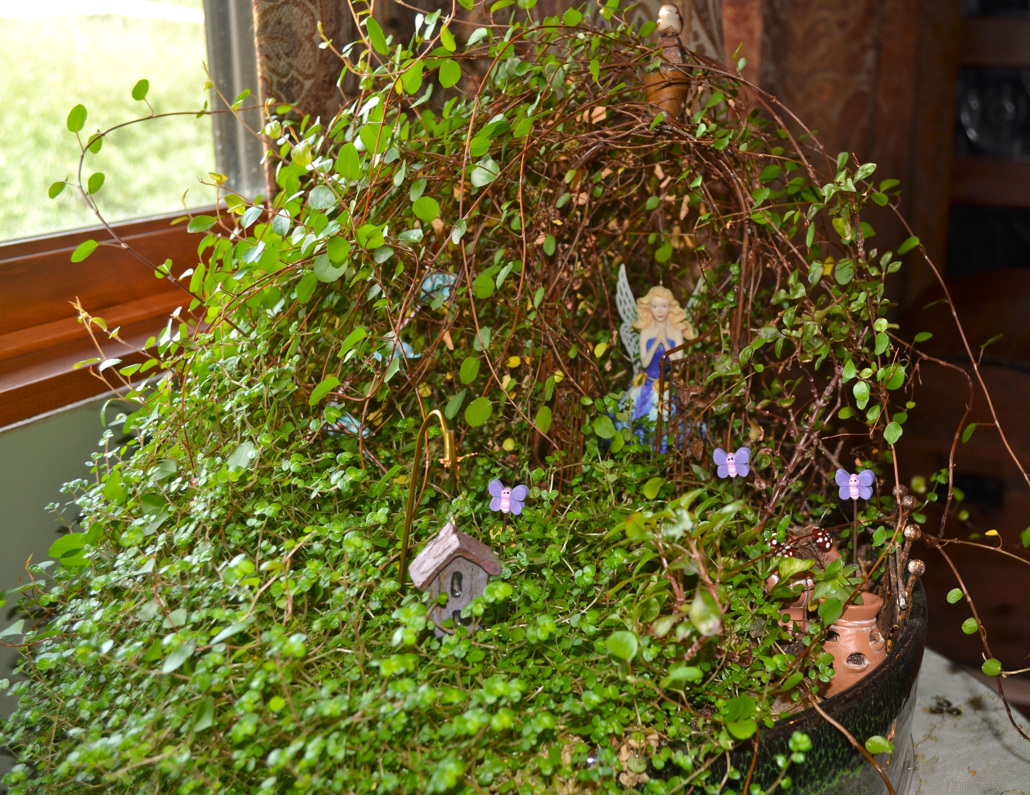 The two plants taking over everything in my fairy garden are ...