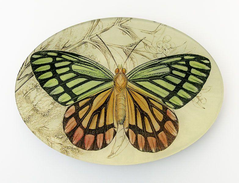 "WT-1071-426 ""Rainbow Moth"""