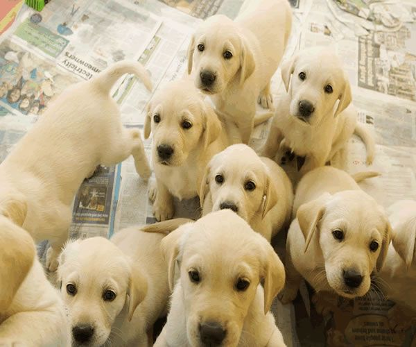 Anyone Else Ever Just Want To Be Smothered By Puppies Puppies
