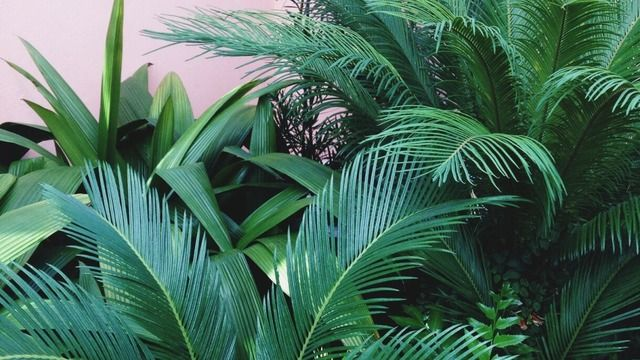 green aesthetic tumblr google search green beauty green rh pinterest com
