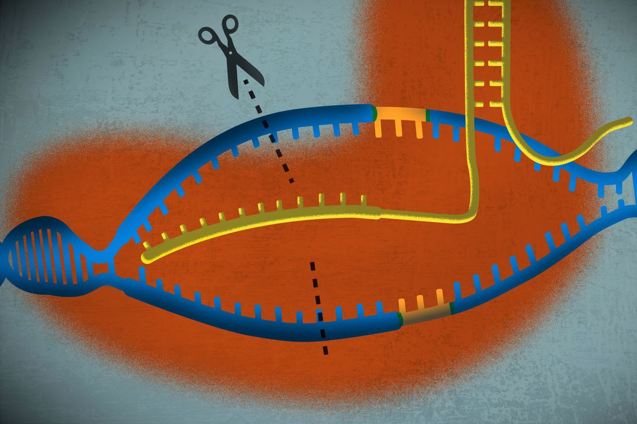 A simple guide to CRISPR, one of the biggest science stories of 2016  # #