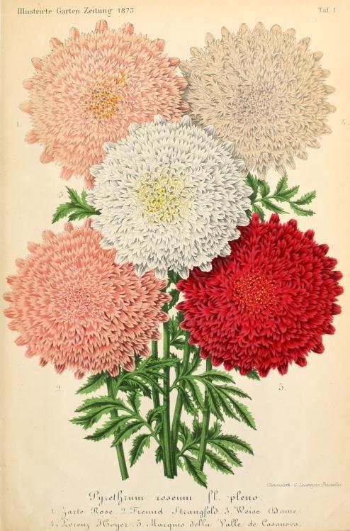 Bd 17 1873 Illustrierte Garten Zeitung Biodiversity Heritage Library Botanical Flowers Flora Flowers Flower Art
