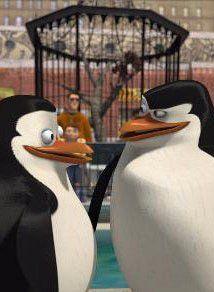 Pin De The Eclectic Lady En Endroits à Visiter Pinguinos De Madagascar Película Madagascar Memes Divertidos
