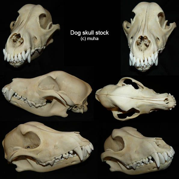 Dog Skulls Google Search Animals In 2018 Pinterest Dog Skull