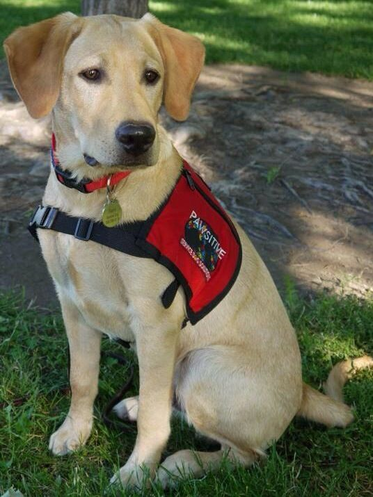 Image By Brittany L Engels On Lean On Me A Service Dog Board