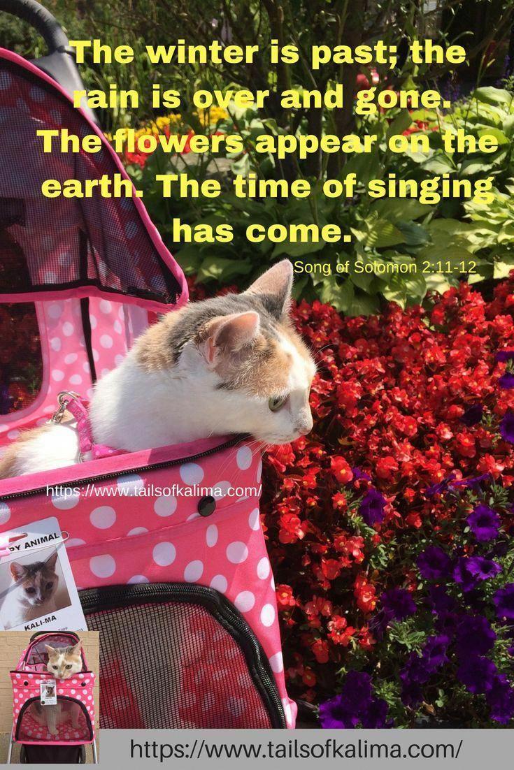 Cats In Heat CatsMakingBiscuits Info 2564155894