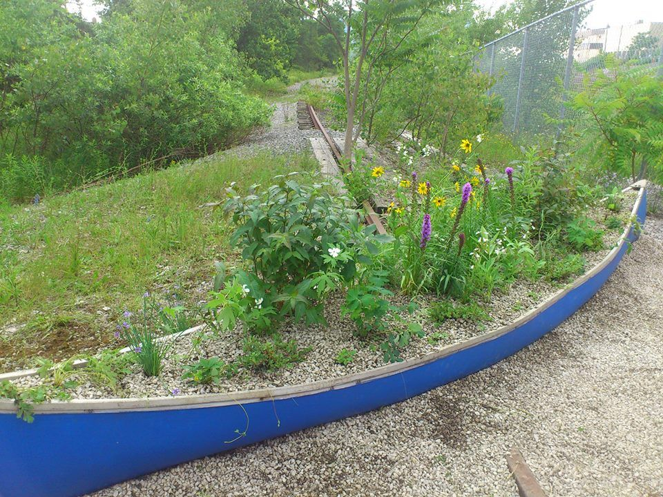 Home Grown National Park Community Canoe Garden with native ON plants at Fort York