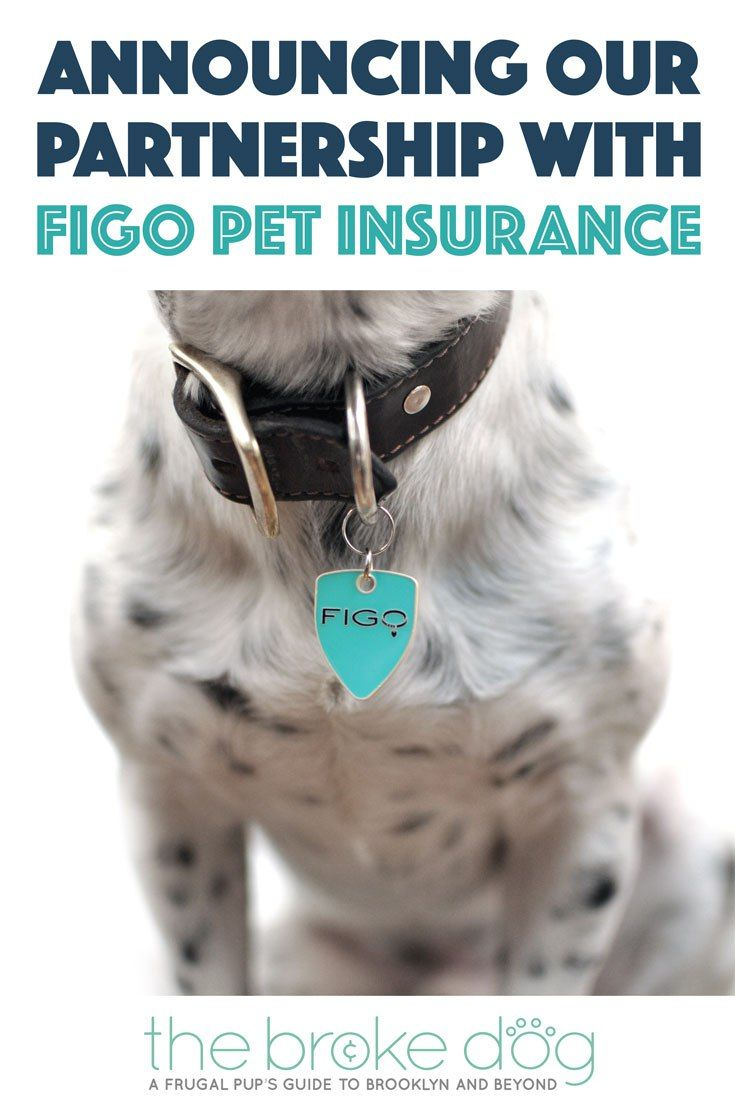 Figo Pet Insurance Our Partnership Exclusive Discount Pet