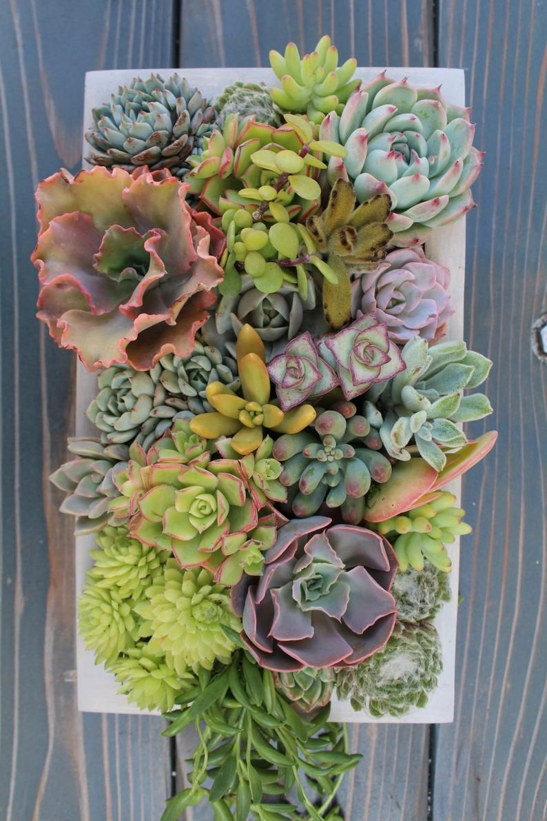 Superbe Idee De Composition De Succulentes Et Plantes Grasses