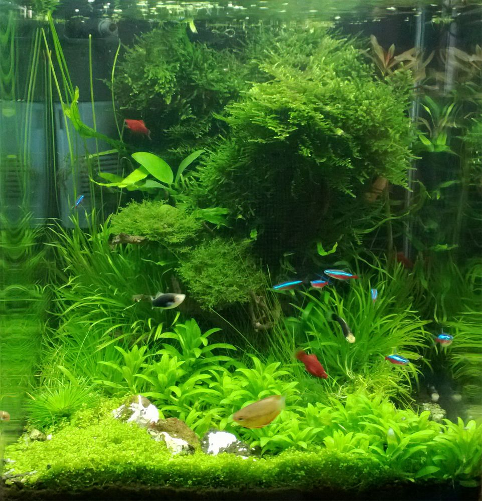 Fish aquarium ideas - Dennerle Nano Cube Contest 2013 Quality Test Results